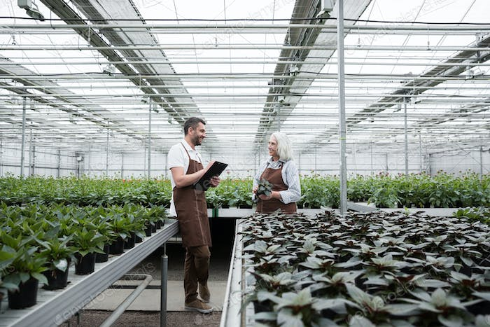 Happy man standing in greenhouse near plants