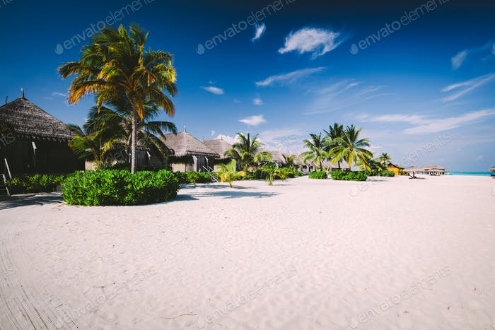 Straw houses on a sandy beach with tropical flora on Maldives