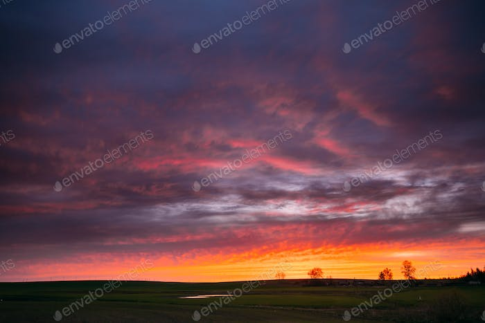 Spring Field In Evening Sunset. Natural Bright Dramatic Sky Pink
