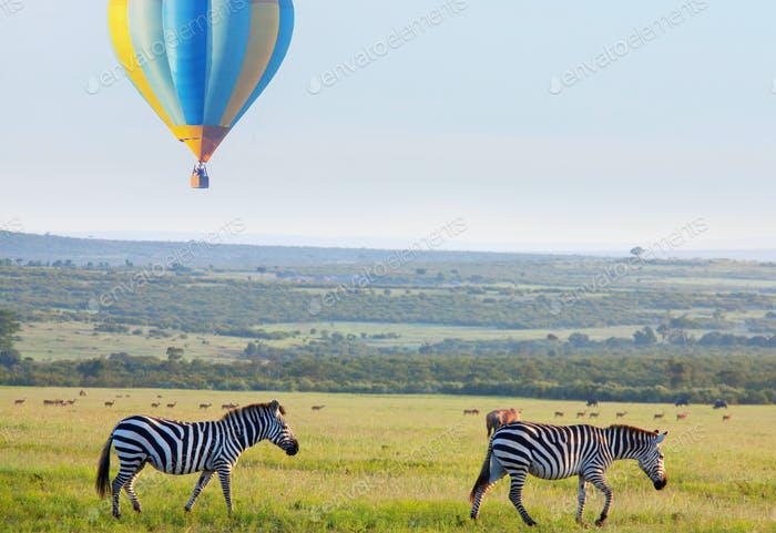 Afrikanische Safari