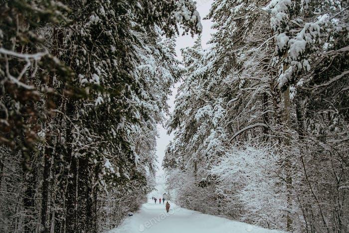 Winterallee im Park