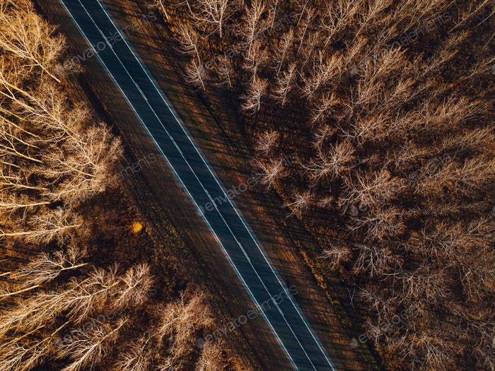 Aerial view of brand new road through autumn forest