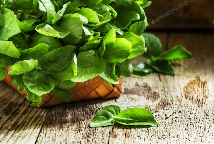 Basil with green leaves in a basket