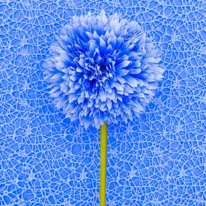 Blue flower. Minimal fashion style