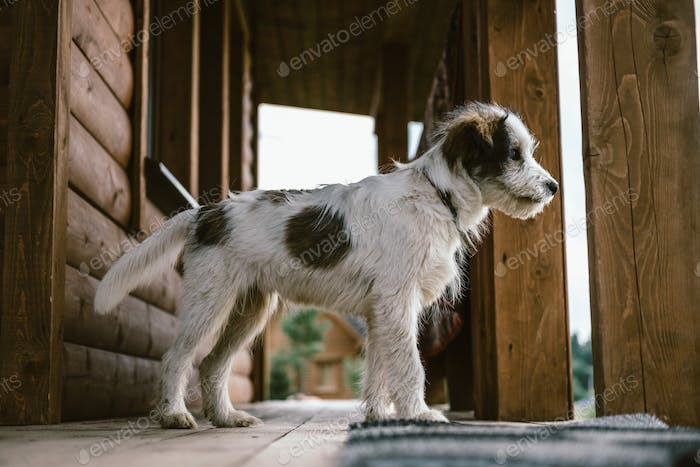 Portrait of a domestic dog in the country