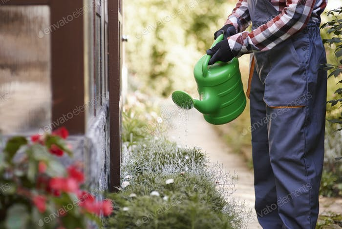 Unrecognizable gardener watering flowers