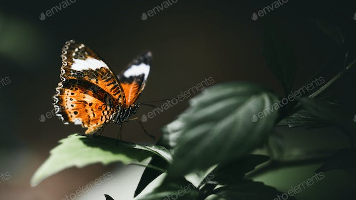 Closeup of a small tortoiseshell on a leaf