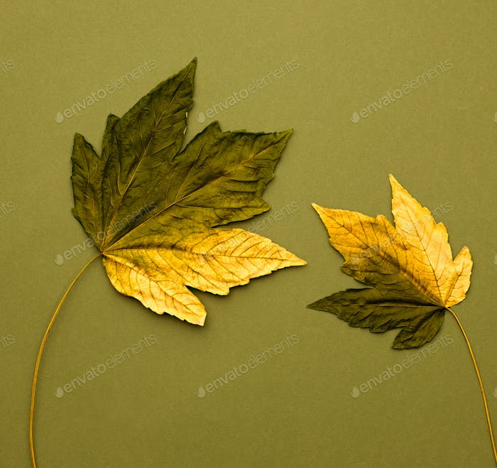Autumn Arrives. Art Gallery. Fashion.Maple Leaves