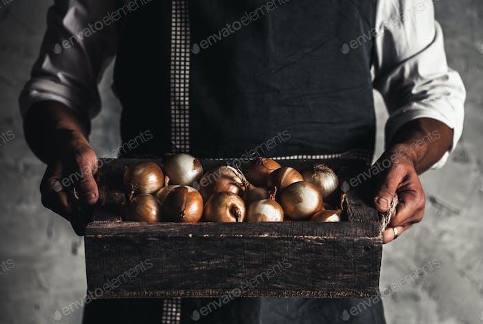Organic vegetables. Healthy food. Fresh organic onion in farmers hands