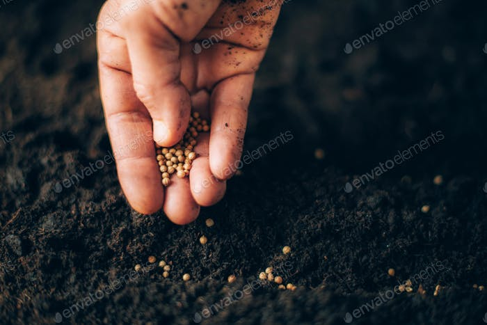 Hand growing seeds on sowing soil. Background with copy space. Agriculture, organic gardening