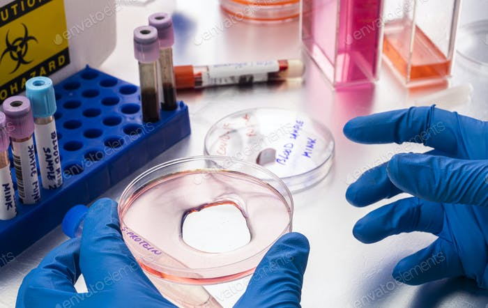 Scientist researching petri-disk S-protein samples in a laboratory