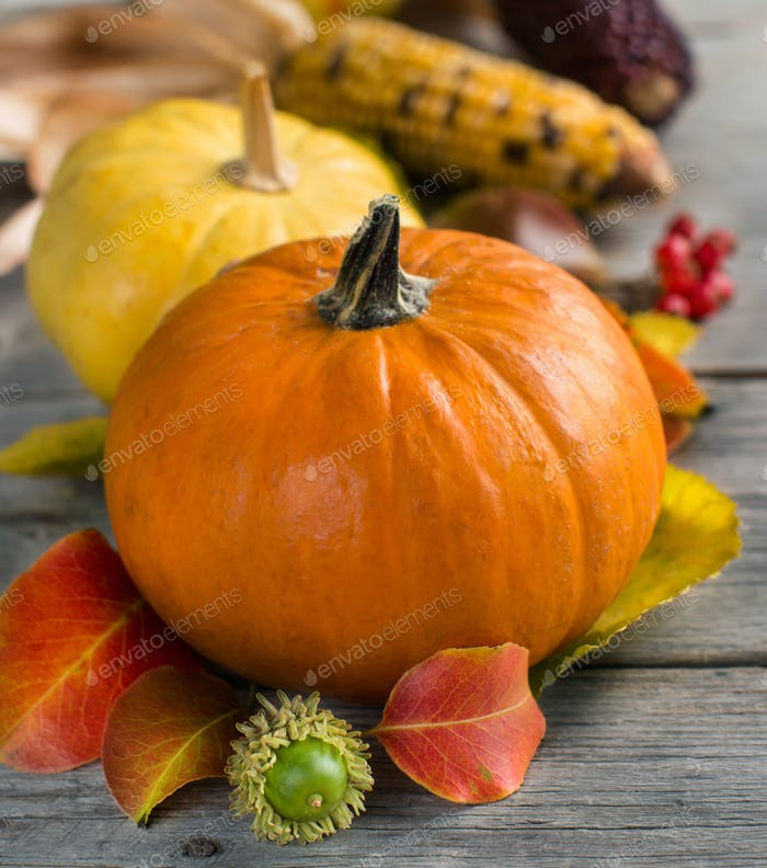 Pumpkins, acorns, leaves and berries