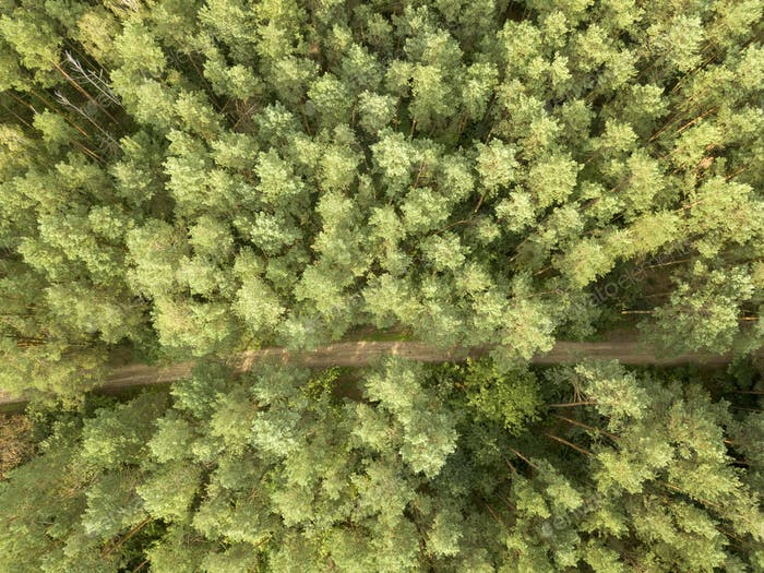 Aerial view from the drone of a natural forest with a dirt road. Foliage background as a layout. Top