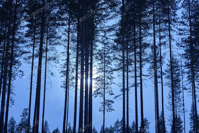 Thumbnail for Finnish landscape with forest and moon by night. Finland environment