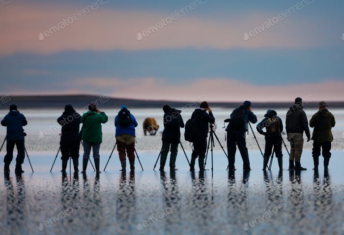 Photographers, brown bear, Lake Clark National Park, Alaska, USA, Ursus arctos,