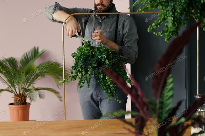 Professional gardener cutting leaves of plant while working in t