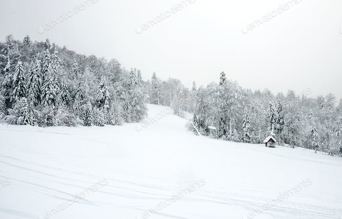 Ski slopes in the coniferous forest in 'Kolasin 1450' mountain s