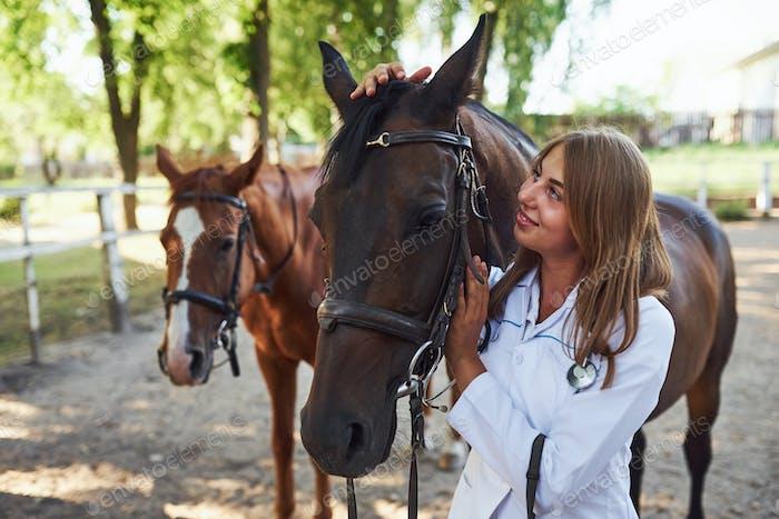 Female vet examining horse outdoors at the farm at daytime