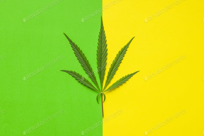 Marijuana cannabis leaf.