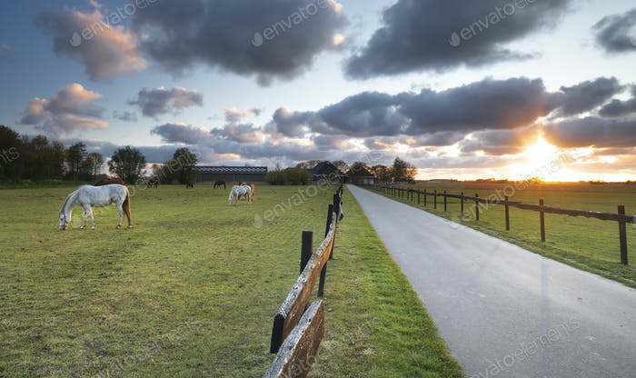 beautiful sunset over meadow with grazing horses