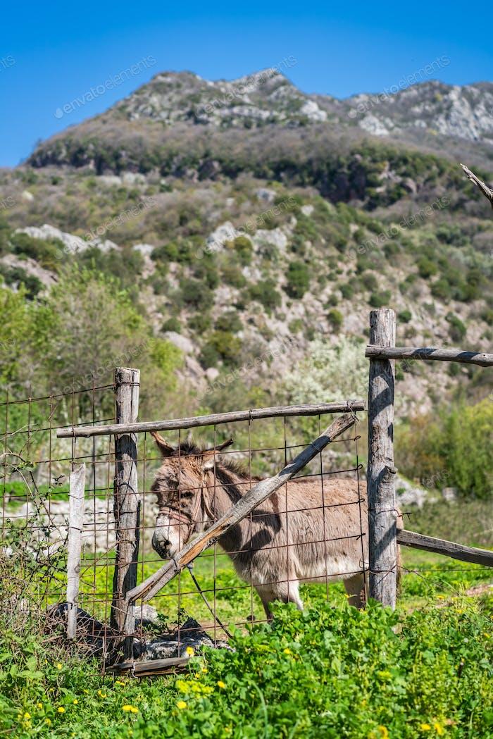 Kleiner trauriger Esel auf einem Bauernhof