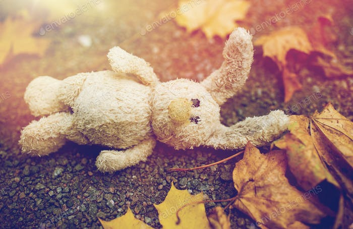 toy rabbit and autumn leaves on road or ground