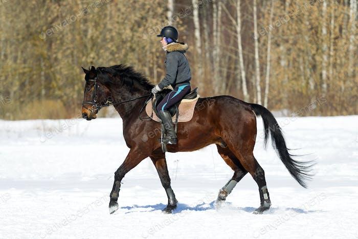 Horseback riding. A woman rides a horse. Training. Hippodrome. Sunny day