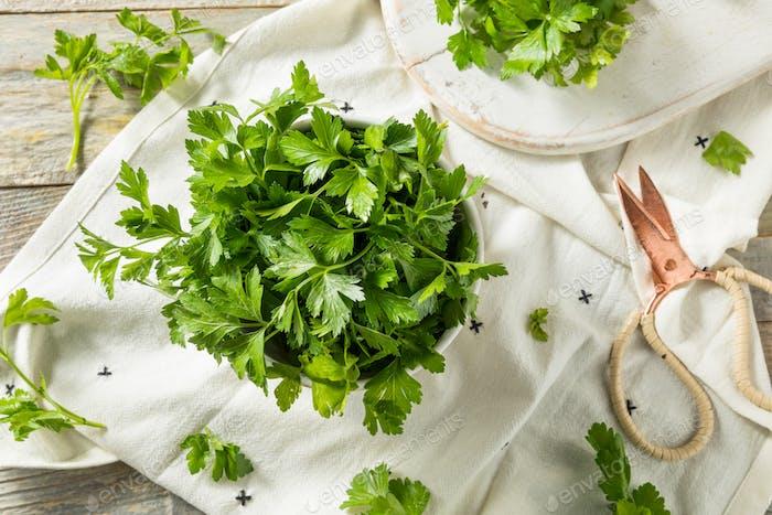 Perejil italiano hoja plana orgánica verde crudo