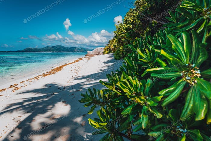Tropical plants at famous Anse Source d'Argent beach on island La Digue in Seychelles. Exotic