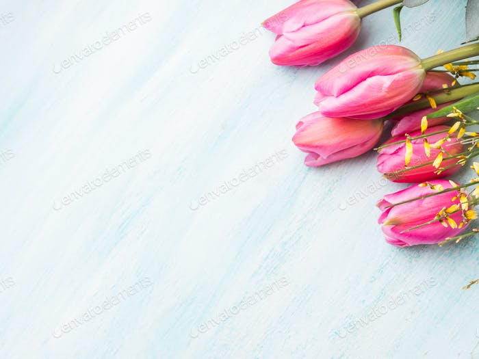 Beautiful tulips on pastel green background