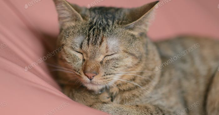 Adorable cat sleeping