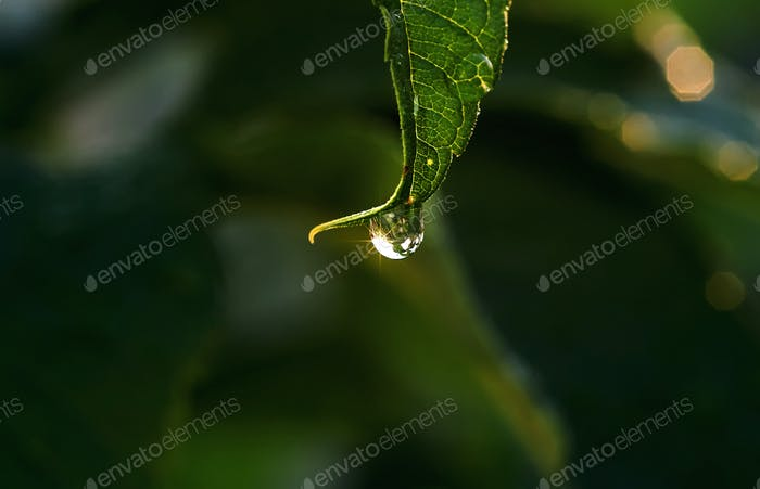 Water drops on the leaf after the rain