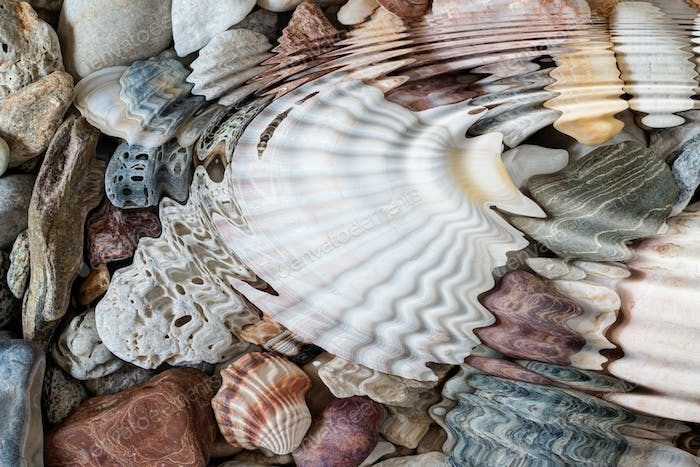 Water ripples above pebbles and seashells