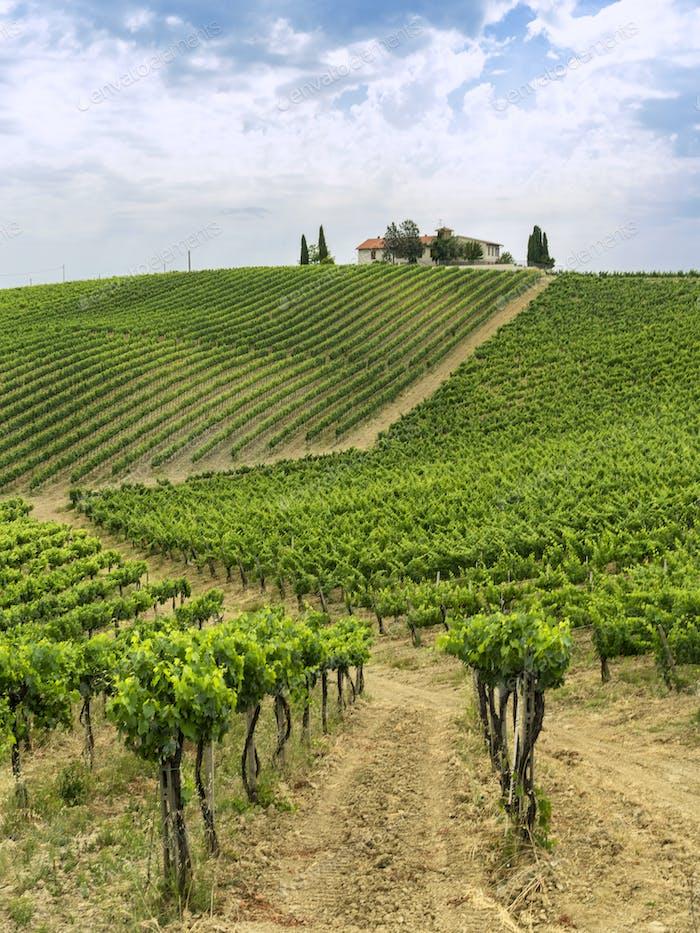 Summer landscape in the Chianti region at summer