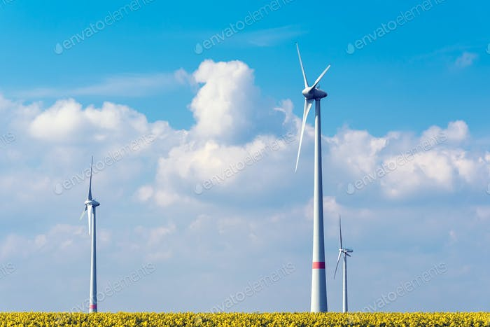 Wind power plant in a rapeseed field