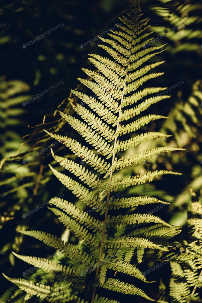 Autumn fern leaves in forest