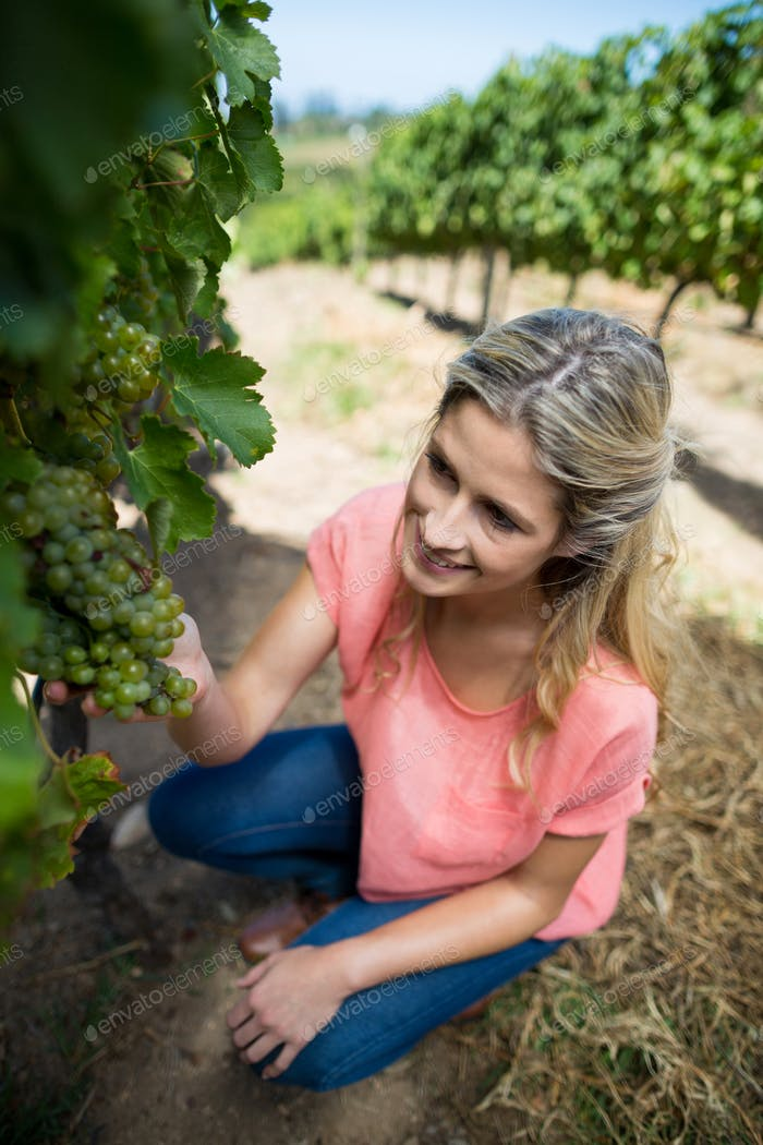 High angle view of smiling woman holding grapes at vineyard