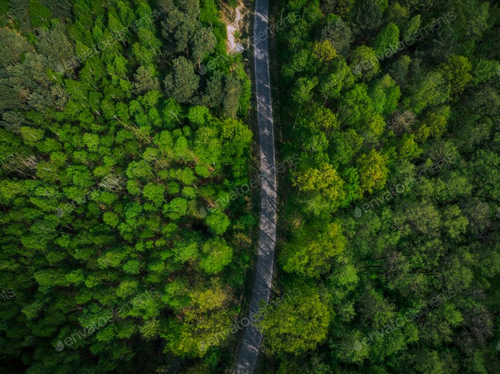 Empty road trough spring pine forest,aerial