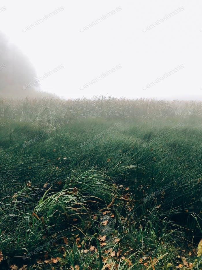 Foggy lake