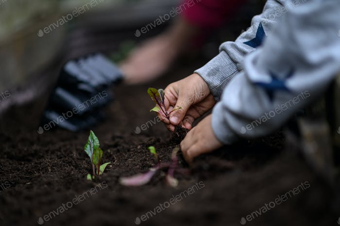 Child planting seedlings