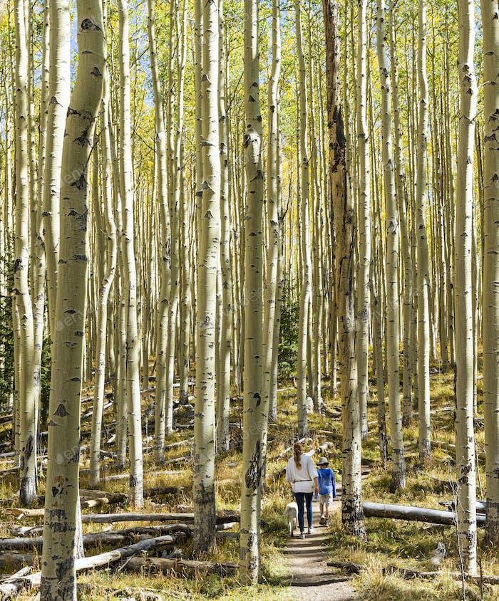 children walking on autumn aspen nature trail