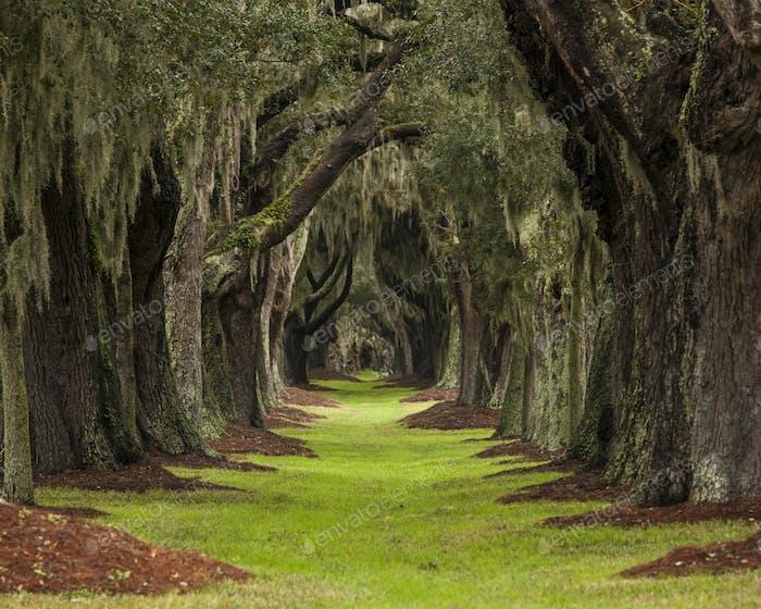 long path through oaks to unknown destination