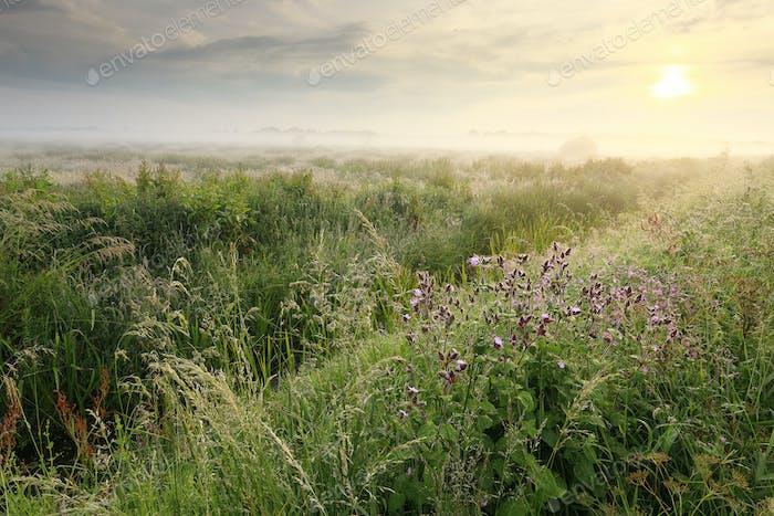 schöne Wildblumen bei nebligen Sonnenaufgang