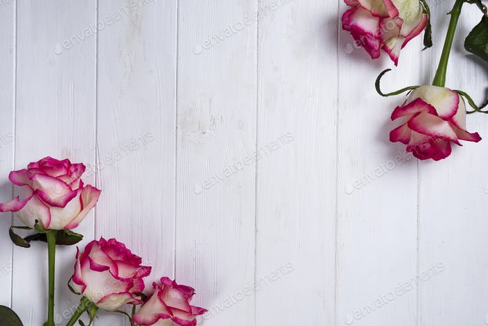 Roses frame on wooden white background