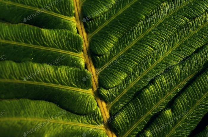 Close-up view of the green fern leaves in tropical forest