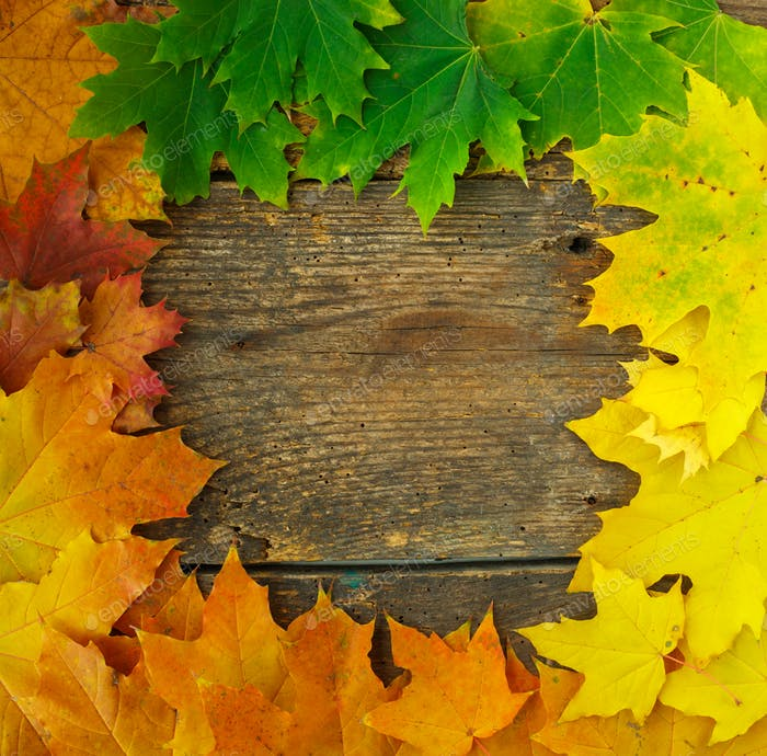 Autumn maple leaves falling frame