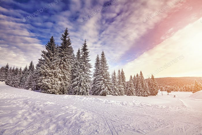 Color toned beautiful winter landscape at sunrise