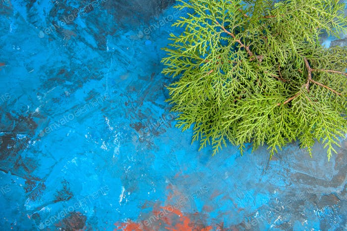 bottom view cedar branches on blue background free space