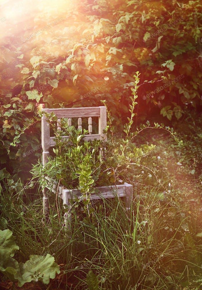 Old wooden chair in wild garden