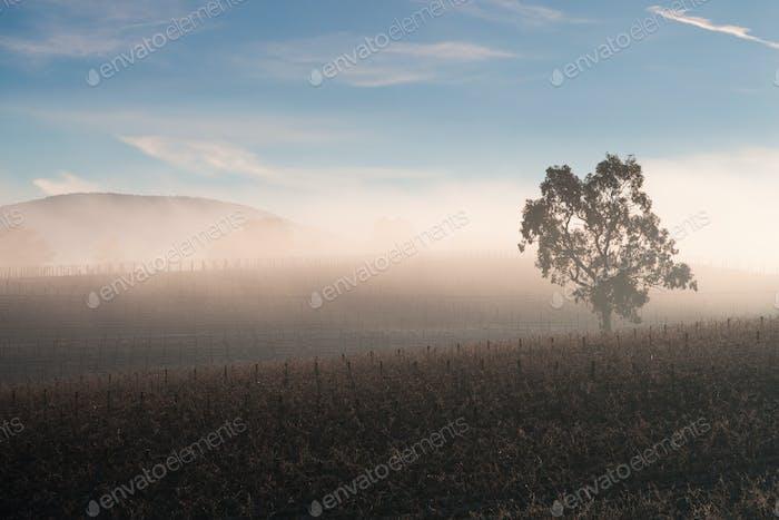 Sonnenaufgang über Yarra Valley im Winter